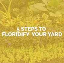 5 steps to floridify your yard